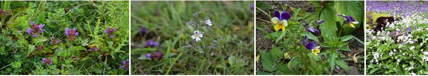 header_flowers